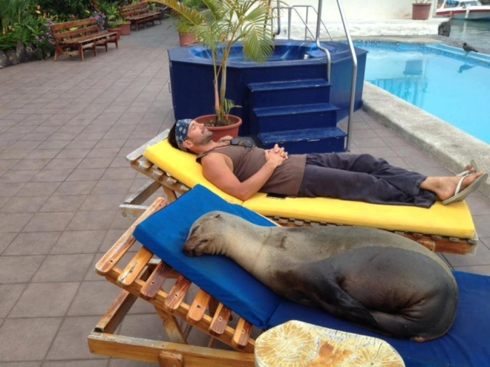 Rescued sea lion gets taste of the good life