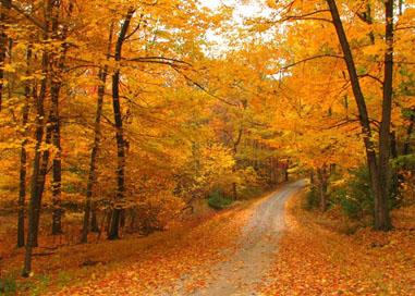 Fall in PA 2010