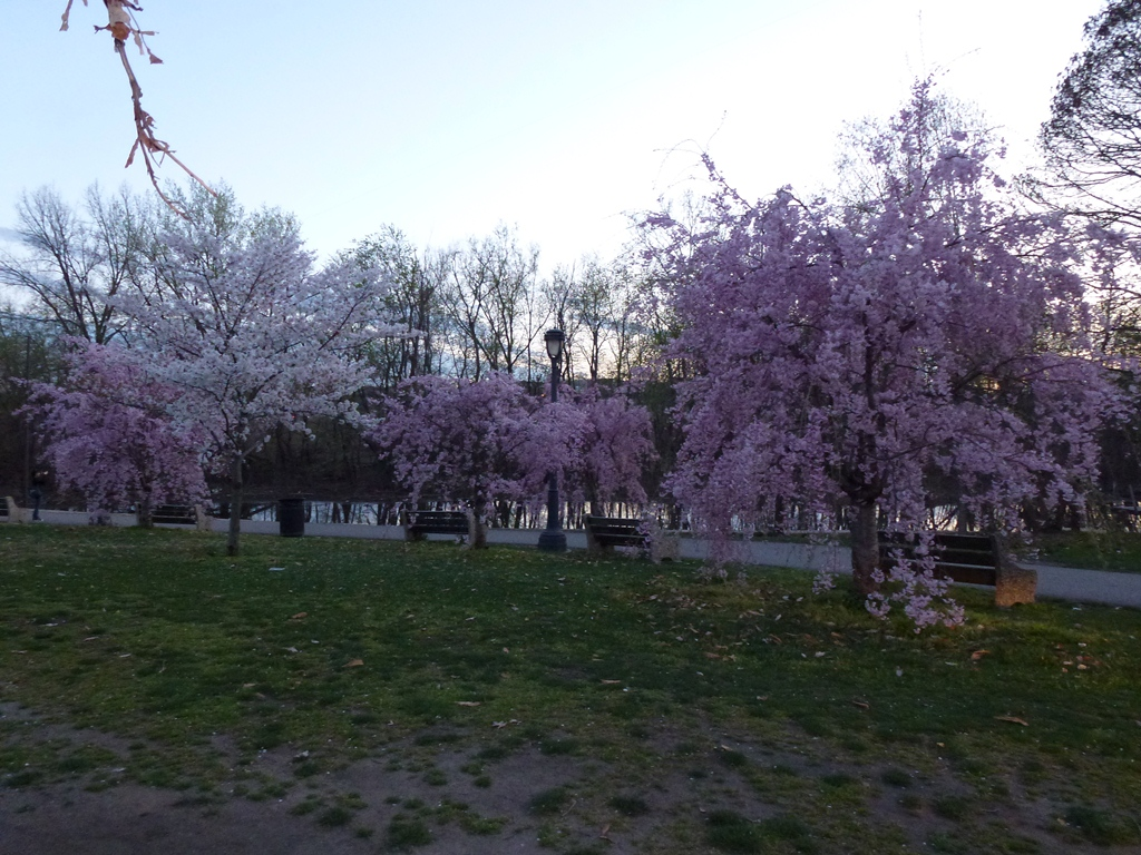 Spring in Kelly Drive